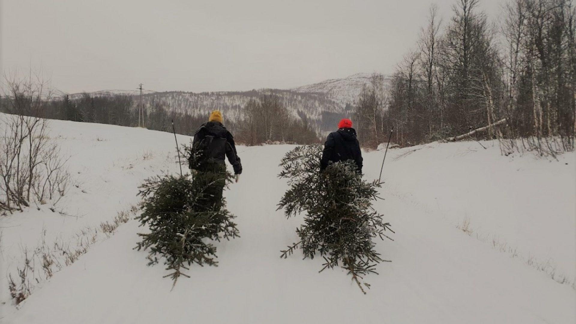 To stykker som drar på hvert sitt juletre
